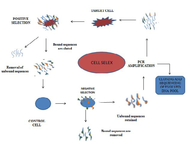 Whole Cell SELEX Technology and its Applications
